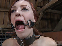 Gagged and bound up playgirl is whipped ferociously